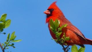 CardinalCM