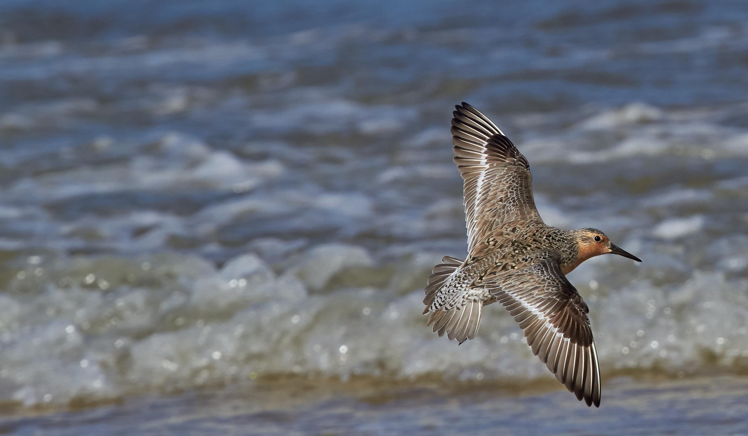 Safeguarding Delaware Bay and other shorebird-migration hotspots