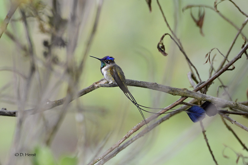 In Peru, bird-feeding stations help protect hummingbird habitat