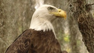 From our galleries: 10 spectacular photos of Bald Eagle