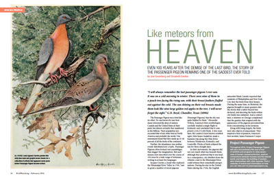 Passenger Pigeon: Like meteors from heaven