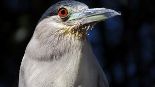 birdwatching2014-2