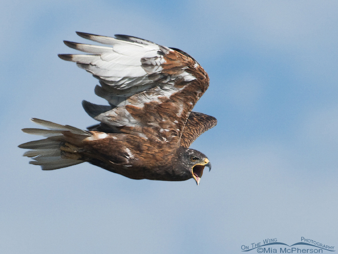11 hawk watches in 10 states to visit this fall, plus one not to miss in spring