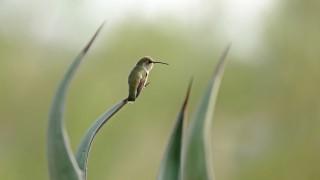 Hummingbird7194Web