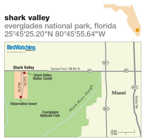 199. Shark Valley, Everglades National Park, Florida