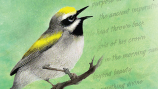 Book assembles best essays by popular Massachusetts birder