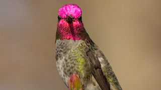 Laura Erickson: How photography can open up a whole new world of birding