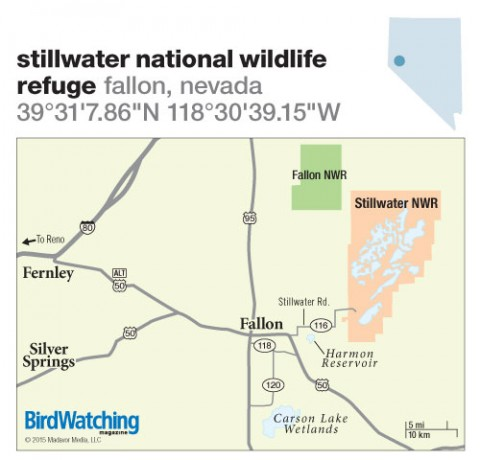 208. Stillwater National Wildlife Refuge, Fallon, Nevada