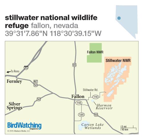 208. Stillwater National Wildlife Refuge, Fallon, Nevada