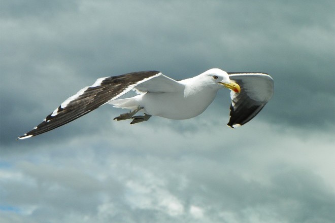 Photo gallery: Gulls that make the pulse race