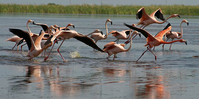 How to see flamingos in Florida this spring