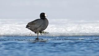 Portage_Lakes150206-8252-Edit