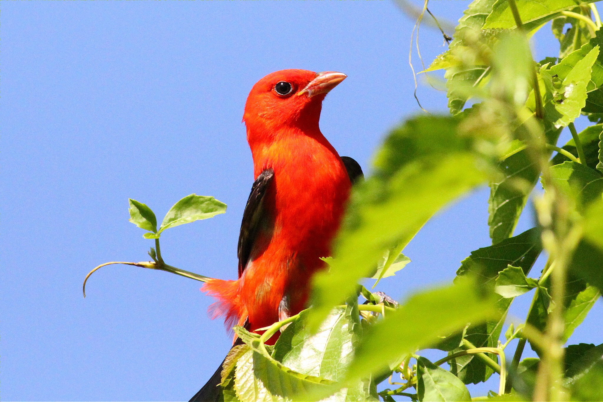 Photo gallery: 10 shots of beautiful spring migrants