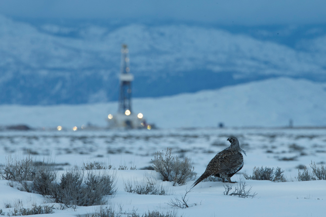 Sage-grouse, Golden Eagles, other birds star in film about America's sagebrush