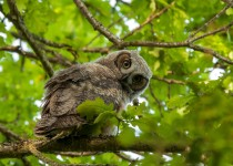 Eagle-Day-Owl-Day-1493-Copy