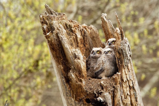 Home sweet home: Six photos of birds on nests