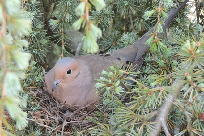 Variety and ingenuity: Six photos of birds on nests