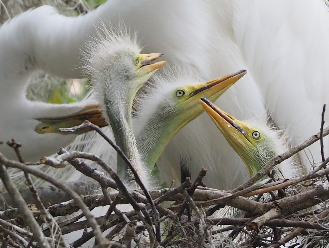 Just right for the job: Six photos of birds on nests
