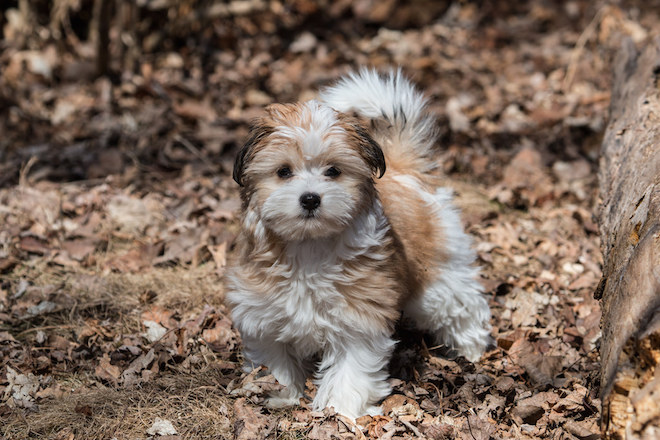 The pleasures of finding life birds for a new puppy