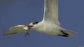 Tern-Lunch-9720fffbbb