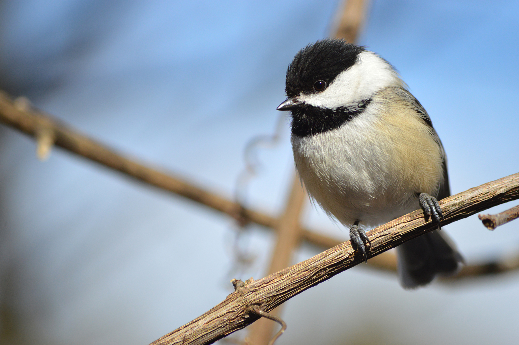 Birds strike windows of homes with, and without feeders