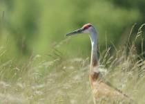 crane2-small