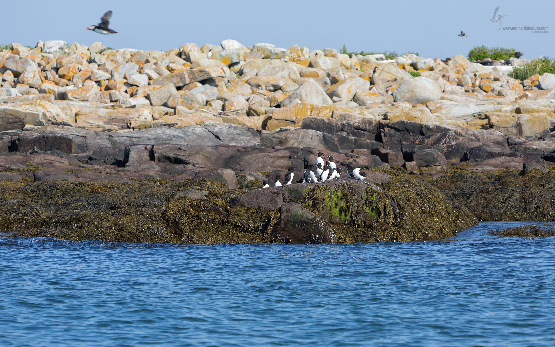 Machias Seal Island Tour