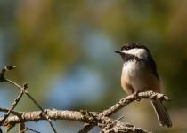 Bird-Sanctuary-011-2