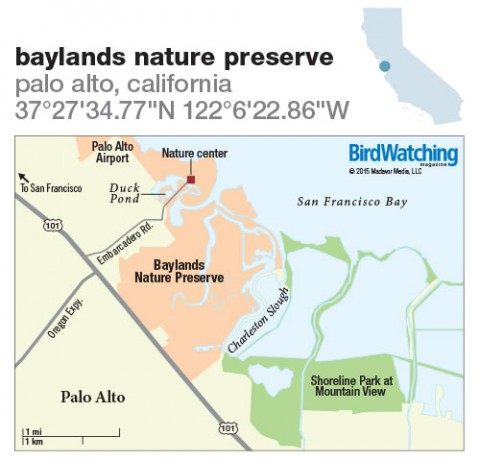 224. Baylands Nature Preserve, Palo Alto, California