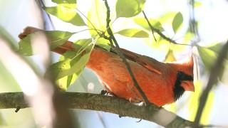Mr-cardinal-21