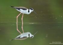 Wildlife Photography by Juan Carlos Vindas