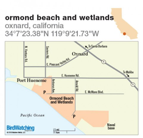227 Ormond Beach and Wetlands Oxnard California BirdWatching