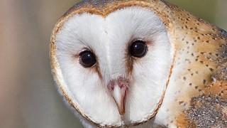 Owl-Barn-14-0832-Edit