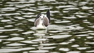 Sabines-Gull-Walnut-Canyon-Ponds-9-17-14-7-200PI