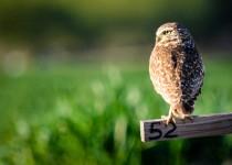 owl-perch2