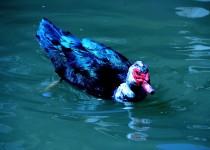 siamak-sabet-bird-9