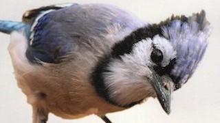 Bird Droppings_320x200