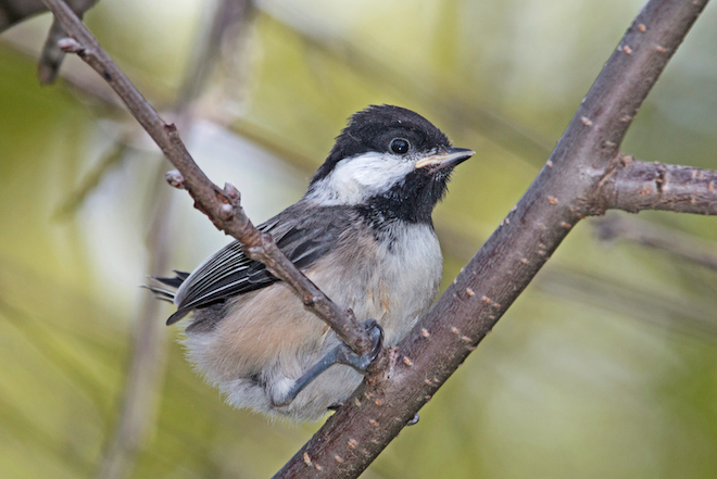 Laura Erickson: Nests in your yard are delightful, most of the time