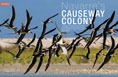Causeway colony