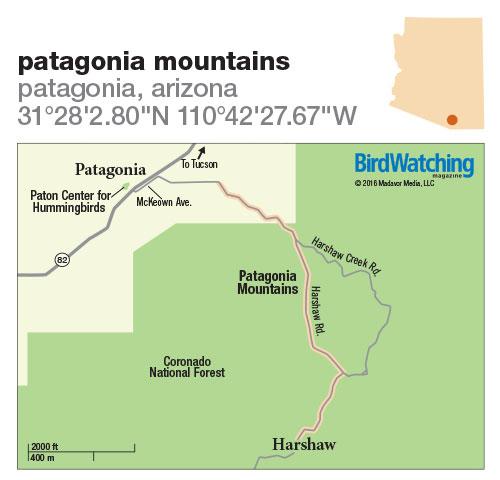 237. Patagonia Mountains, Patagonia, Arizona - BirdWatching