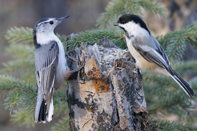 Map your backyard to attract birds