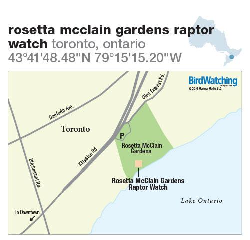 244. Rosetta McClain Gardens Raptor Watch, Toronto, Ontario