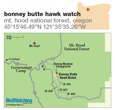 243. Bonney Butte Hawk Watch, Mt. Hood National Forest, Oregon