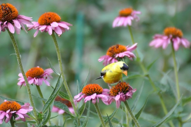 Why lawn chemicals really are harmful to birds