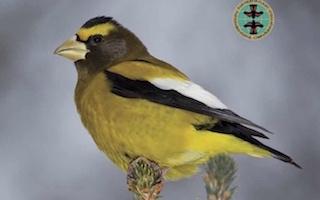 Scientists document a billion fewer landbirds since 1970