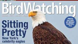 Five reasons to pick up the October issue of BirdWatching