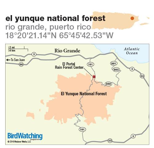 247. El Yunque National Forest, Rio Grande, Puerto Rico