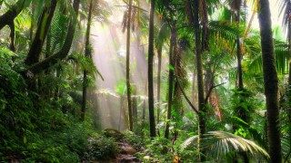 El Yunque National Forest, in Puerto Rico, is a birding hotspot.