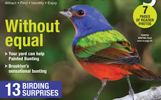 New BirdWatching magazine answers questions about Painted Bunting