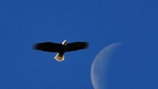 eag-lune